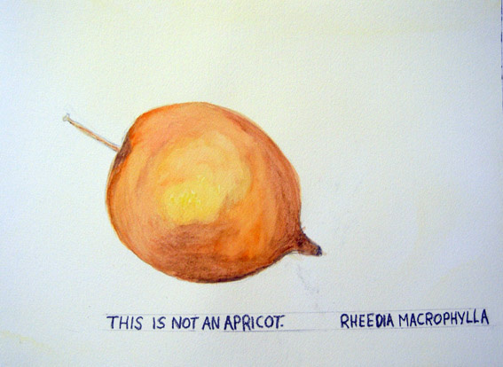 Maria Thereza Alves - This is not an Apricot